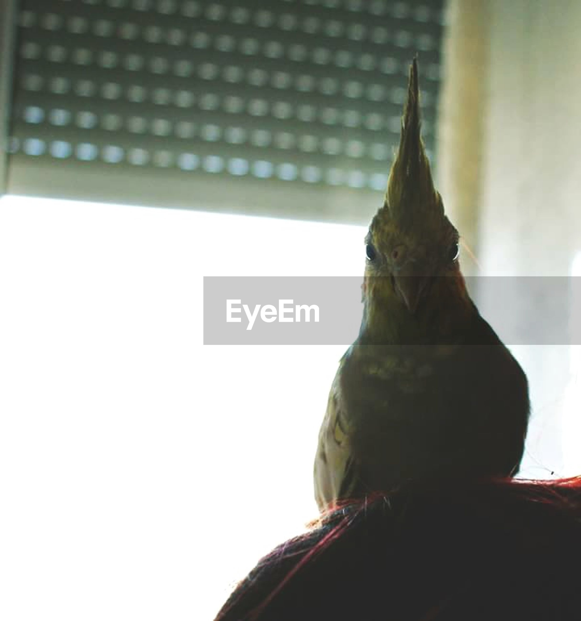 bird, one animal, animal themes, animals in the wild, wildlife, perching, low angle view, focus on foreground, close-up, day, pigeon, clear sky, built structure, no people, outdoors, bird of prey, copy space, side view, statue, architecture