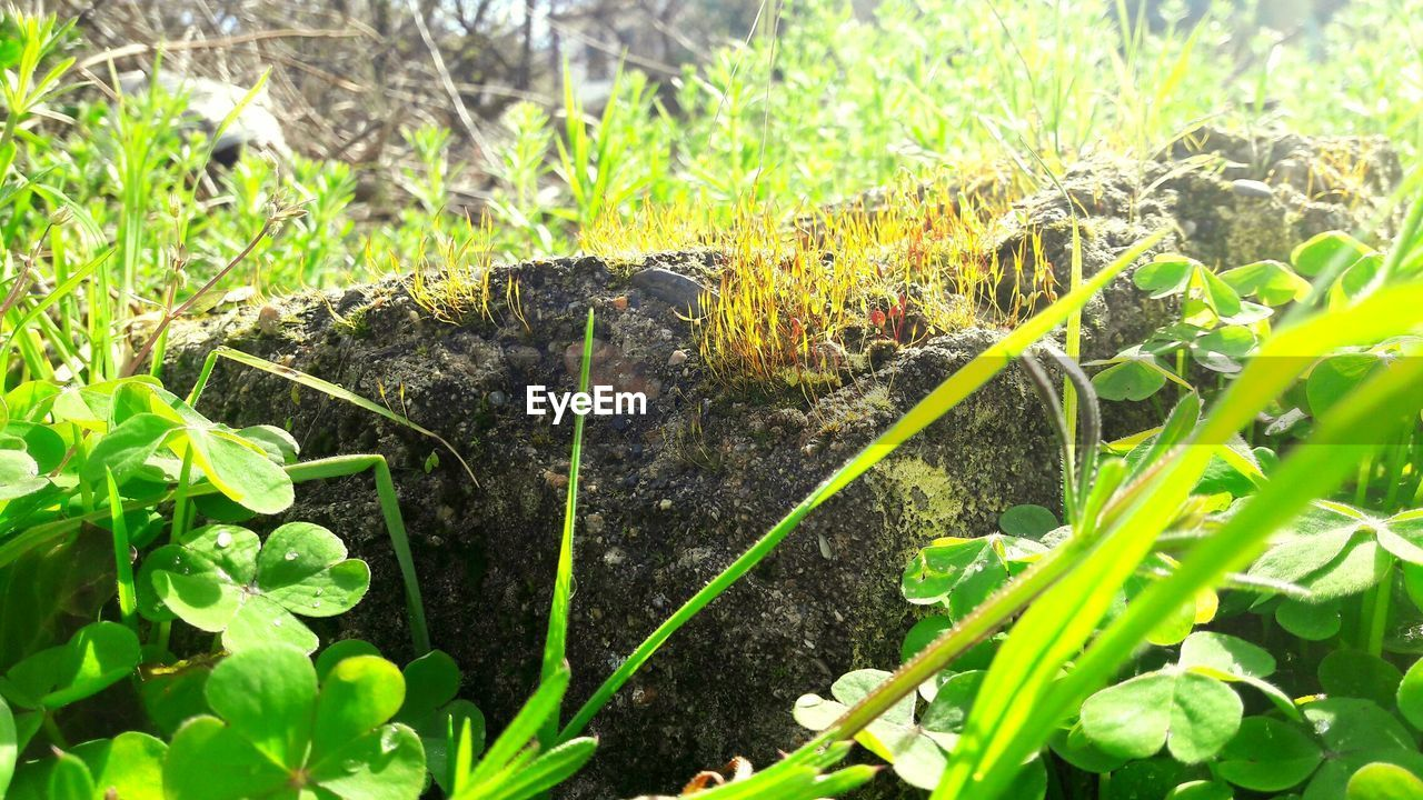 growth, plant, leaf, no people, green color, nature, day, outdoors, animal themes, grass, close-up, freshness