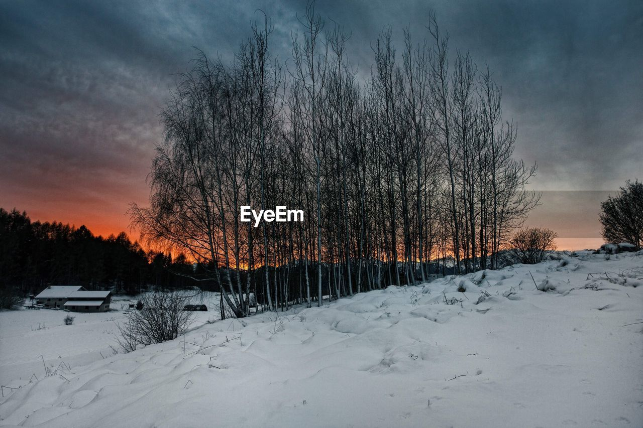 cold temperature, snow, winter, weather, nature, tree, bare tree, beauty in nature, sky, tranquility, tranquil scene, scenics, outdoors, sunset, no people, landscape, cloud - sky, day