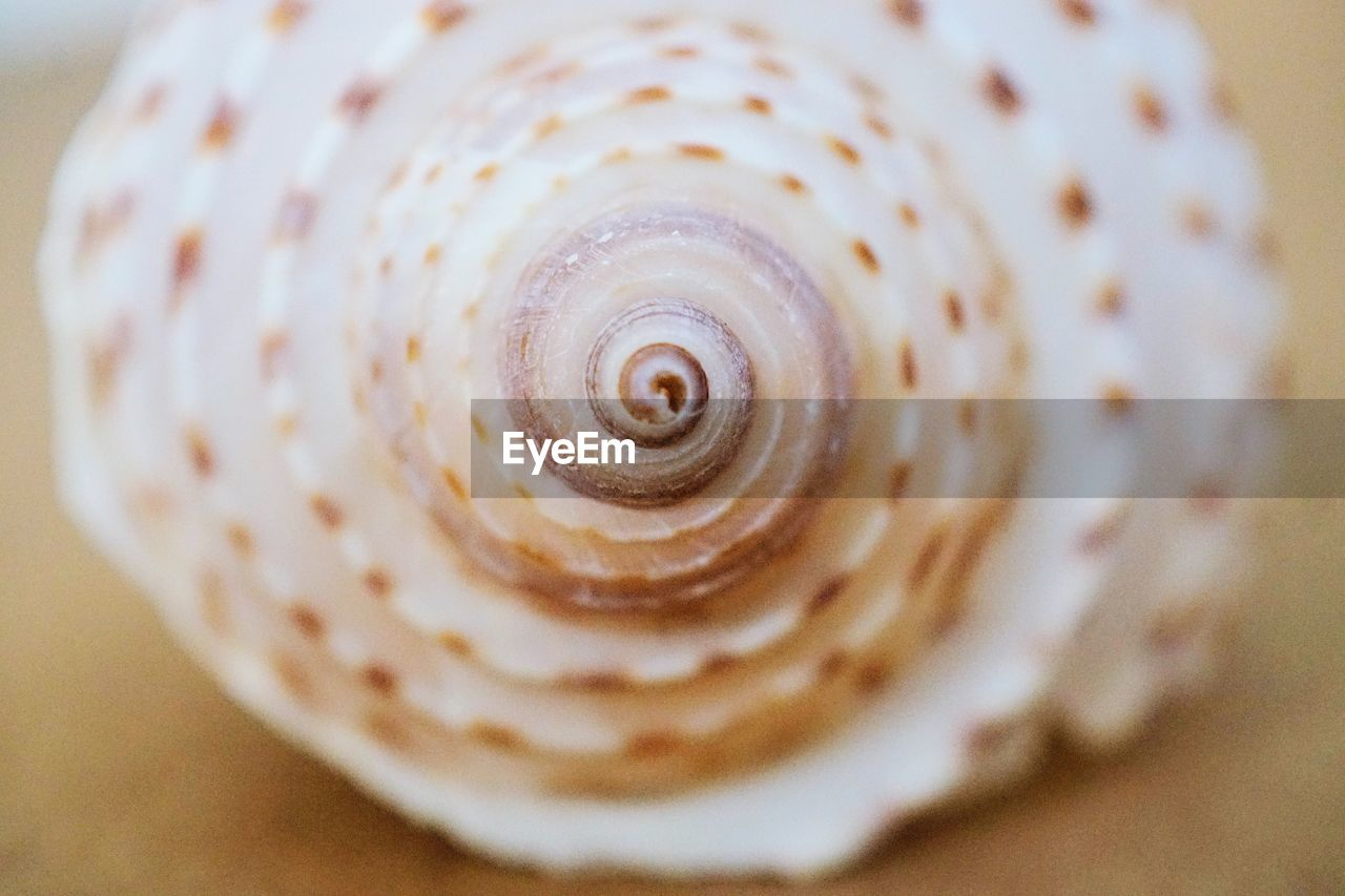 close-up, shell, selective focus, animal shell, pattern, spiral, no people, animal wildlife, natural pattern, animal, seashell, still life, swirl, animal themes, indoors, mollusk, beauty in nature, textured, food and drink, one animal