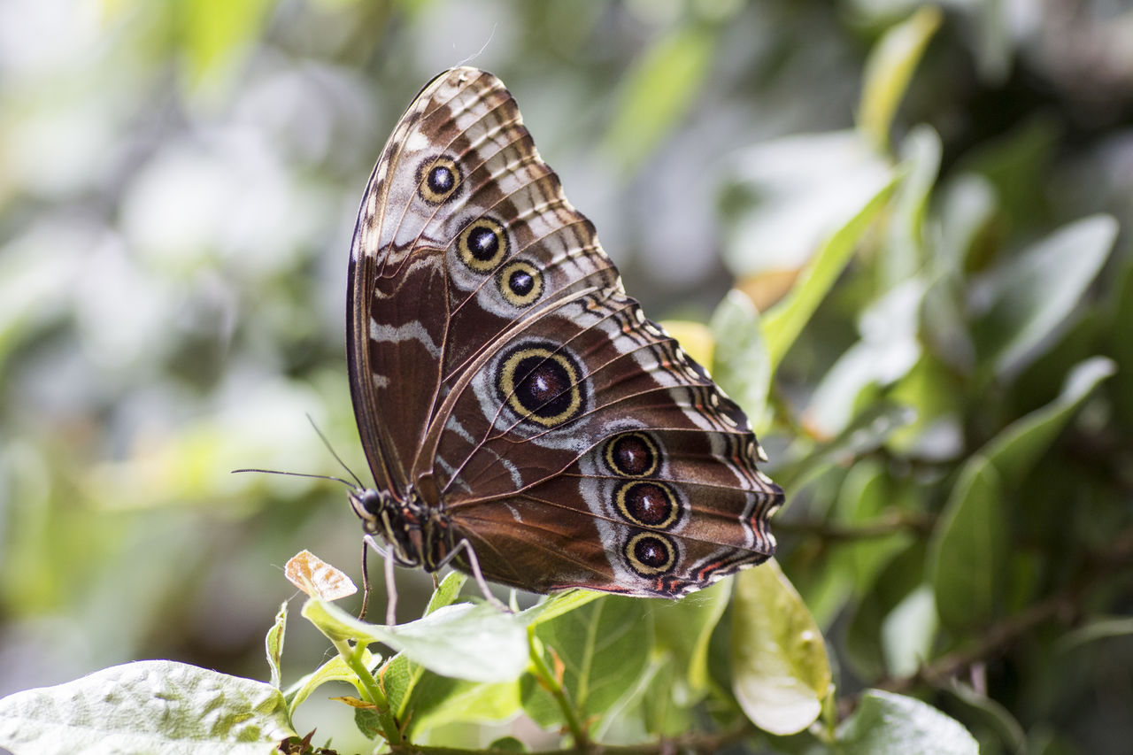 butterfly - insect, insect, animals in the wild, one animal, butterfly, animal themes, animal wing, nature, animal wildlife, no people, animal markings, outdoors, plant, focus on foreground, day, close-up, leaf, perching, spread wings, beauty in nature, pollination, fragility, freshness