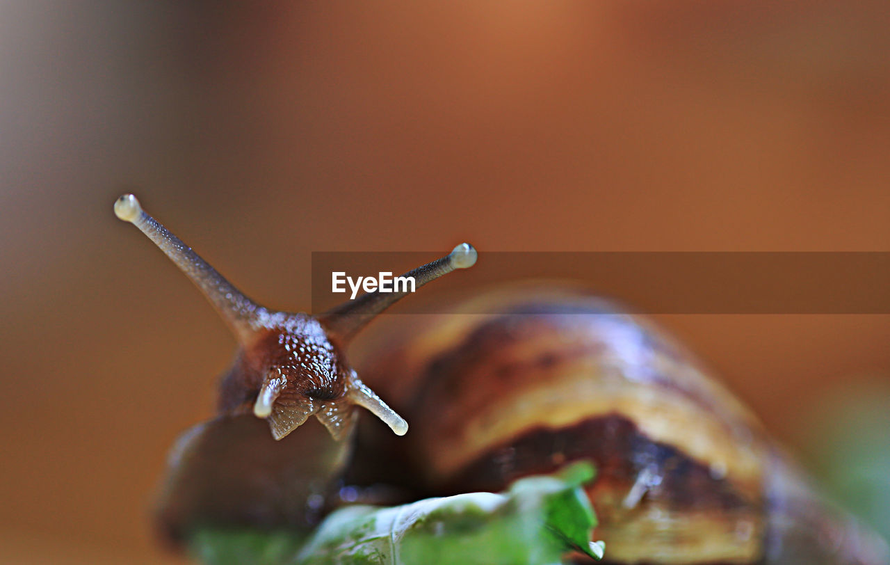Detail shot of snail against blurred background