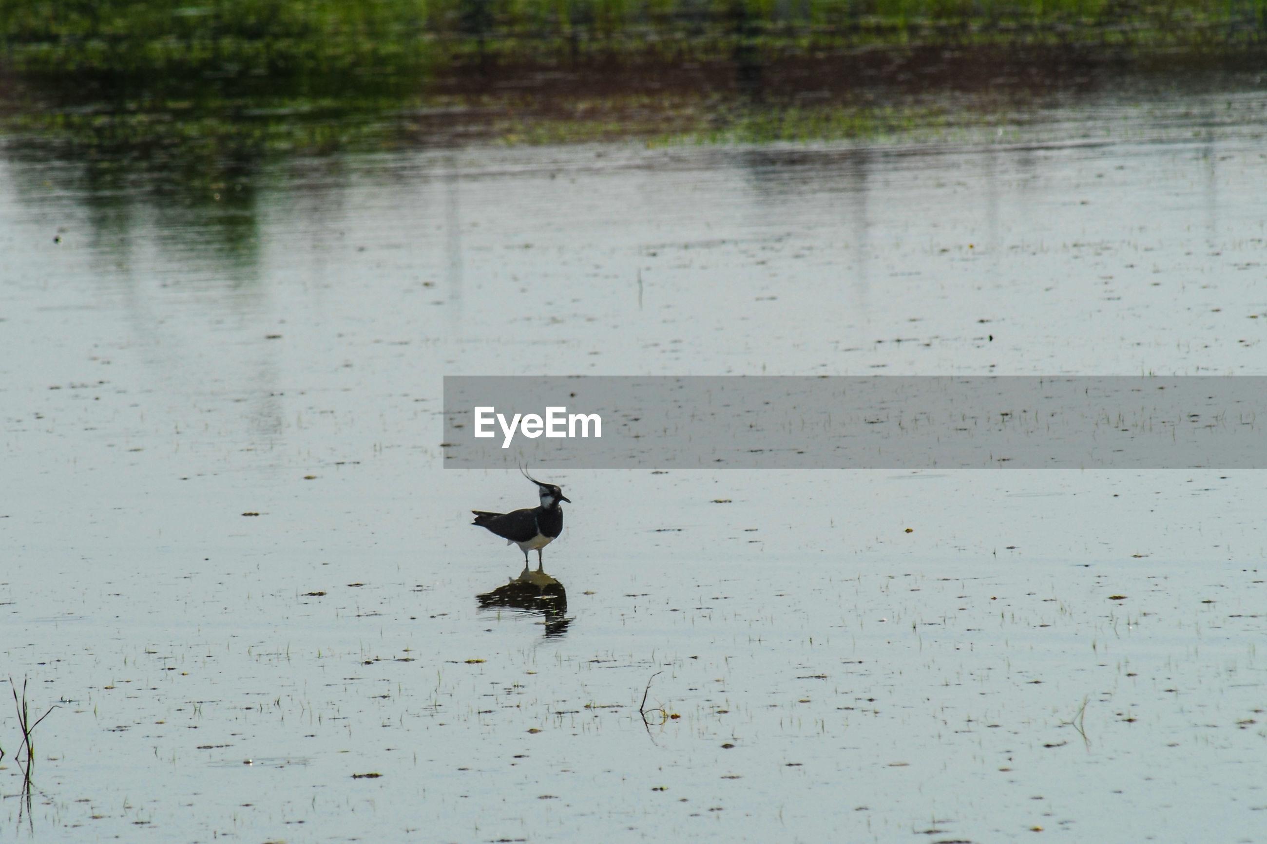 BIRD PERCHING ON RIPPLED LAKE