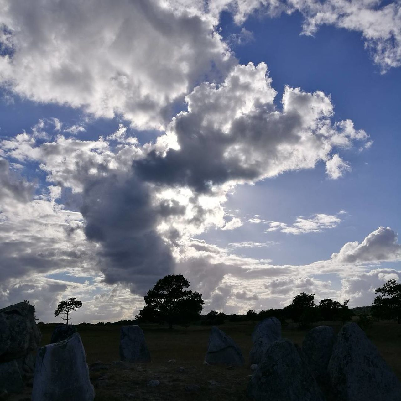 cloud - sky, sky, nature, beauty in nature, landscape, outdoors, day, tranquility, no people, scenics, tree, animal themes