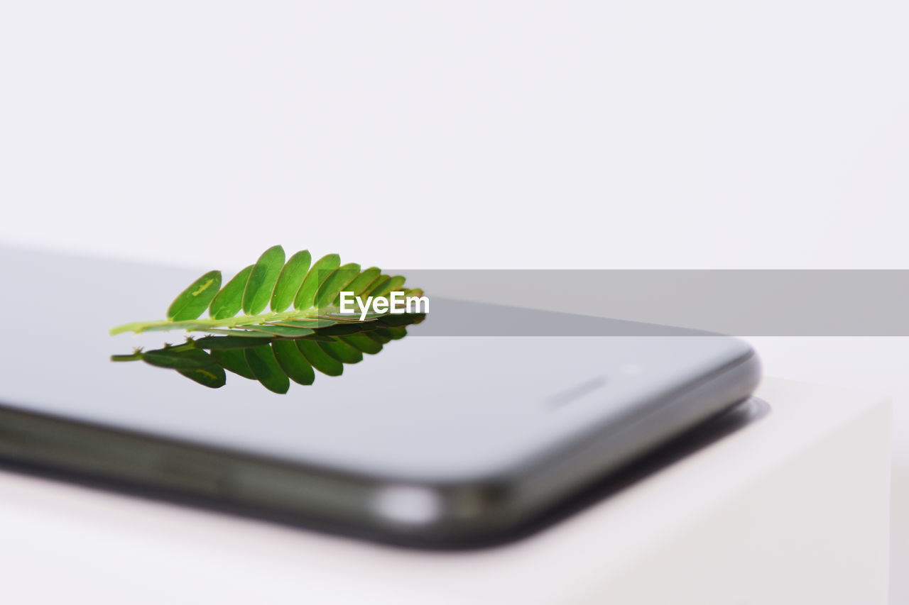 communication, studio shot, wireless technology, technology, copy space, smart phone, close-up, no people, selective focus, green color, indoors, leaf, plant part, portable information device, white background, mobile phone, still life, connection, plant, table