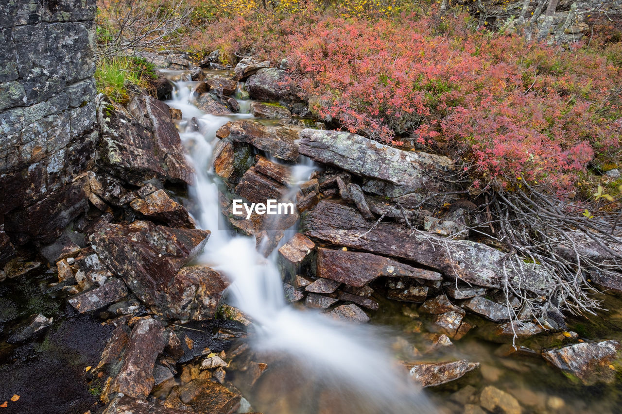 tree, nature, plant, beauty in nature, day, no people, water, land, rock, forest, motion, solid, rock - object, environment, outdoors, scenics - nature, flowing water, long exposure, growth, flowing, purity