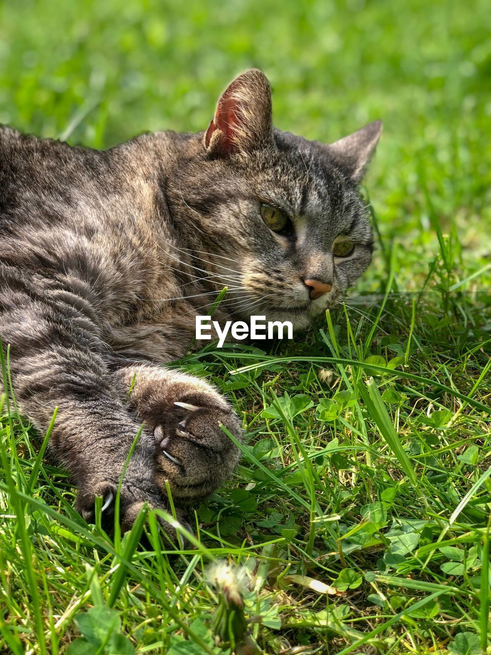 animal themes, animal, mammal, grass, group of animals, cat, plant, vertebrate, feline, two animals, domestic cat, young animal, no people, domestic animals, nature, domestic, pets, green color, day, relaxation, animal family, kitten, whisker