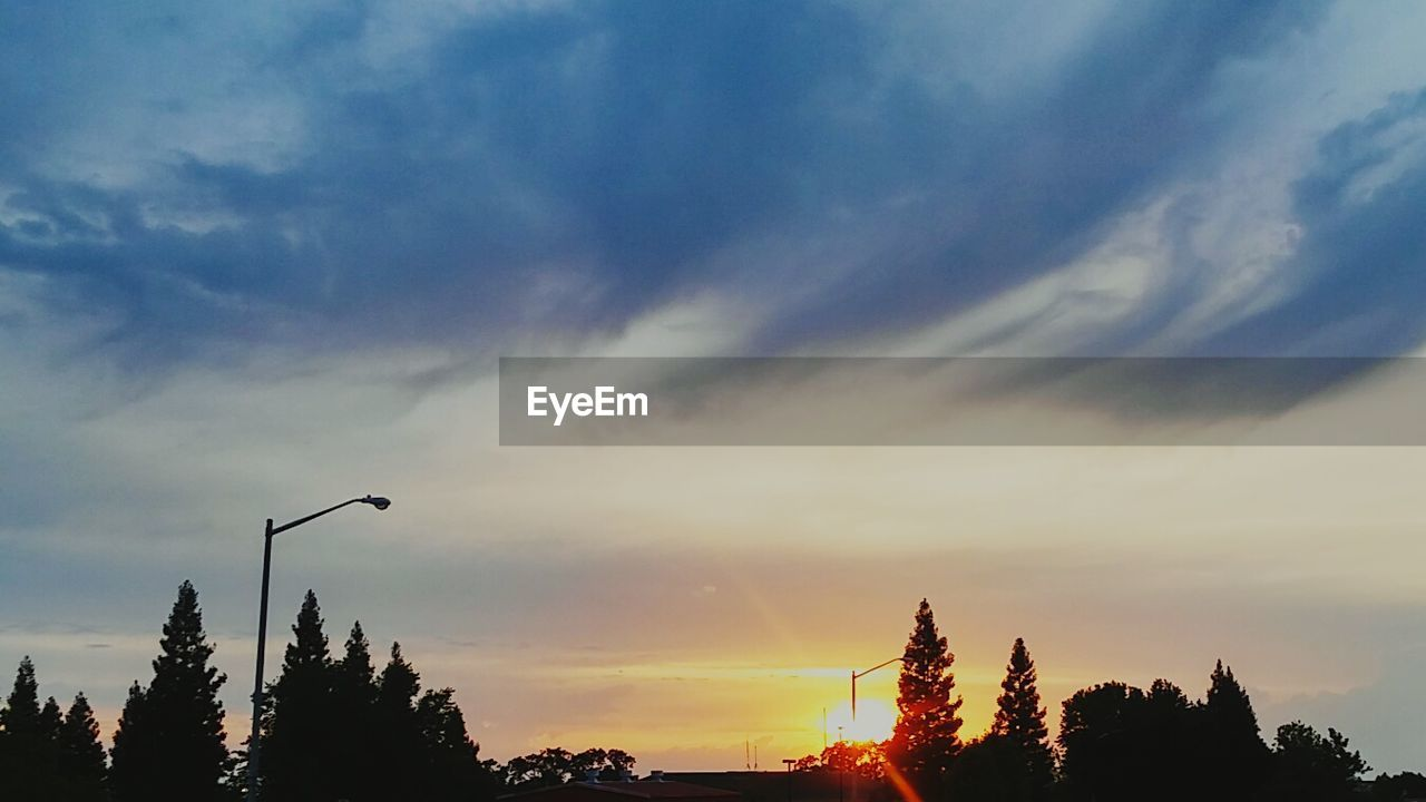 tree, sky, sunset, silhouette, cloud - sky, beauty in nature, nature, scenics, tranquility, no people, outdoors, low angle view, day