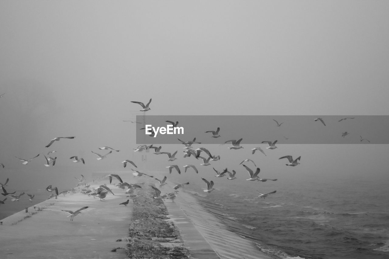 large group of animals, flying, vertebrate, group of animals, bird, animals in the wild, animal, animal themes, animal wildlife, sky, flock of birds, nature, no people, beauty in nature, water, sea, motion, mid-air, day, outdoors