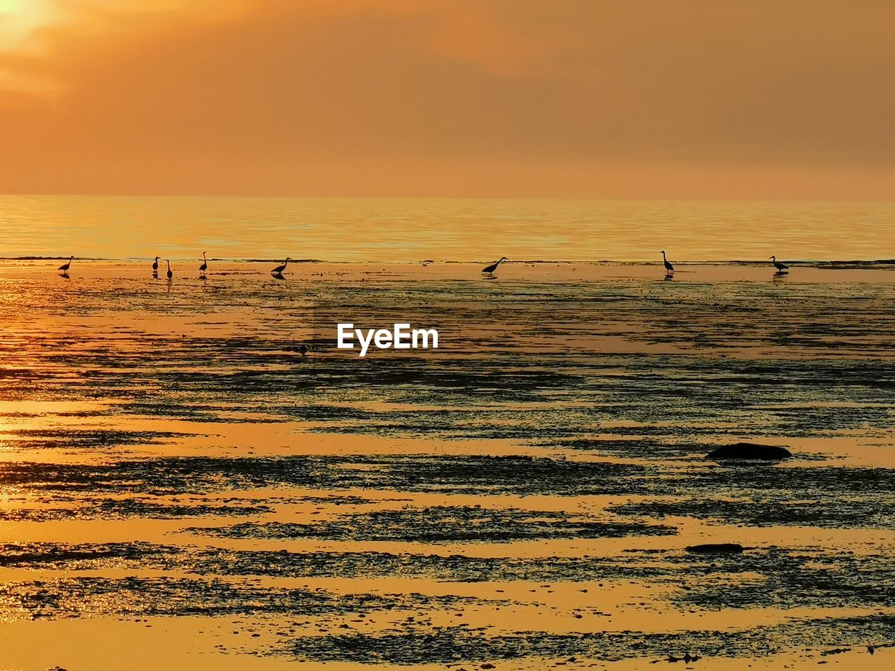 sunset, sky, orange color, beauty in nature, animal themes, water, scenics - nature, animal wildlife, animals in the wild, animal, bird, group of animals, vertebrate, tranquil scene, tranquility, sea, land, nature, large group of animals, no people, horizon over water, outdoors, flock of birds