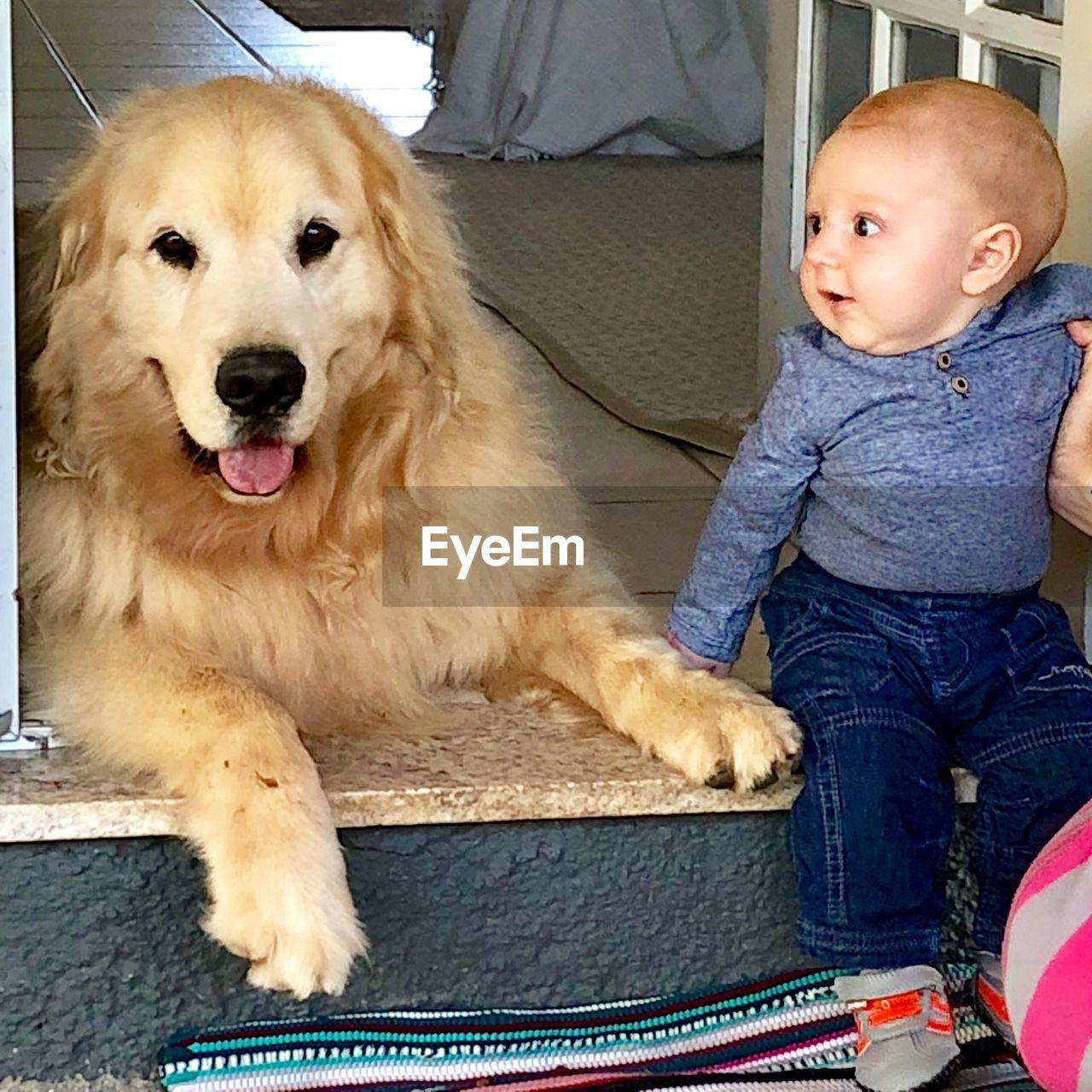 Cute baby boy looking at dog