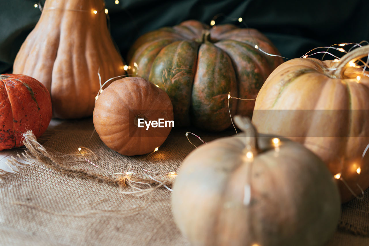 Close up ripe large pumpkins of various shapes with a garland. rustic still life.