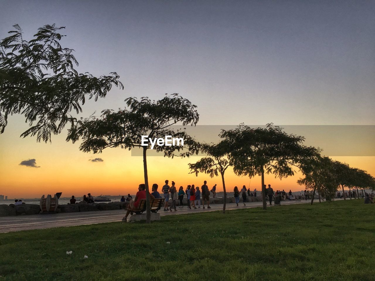 tree, nature, sunset, grass, large group of people, beauty in nature, real people, leisure activity, growth, clear sky, outdoors, scenics, silhouette, park - man made space, landscape, tranquility, tranquil scene, sky, men, tree trunk, lifestyles, women, palm tree, day, people