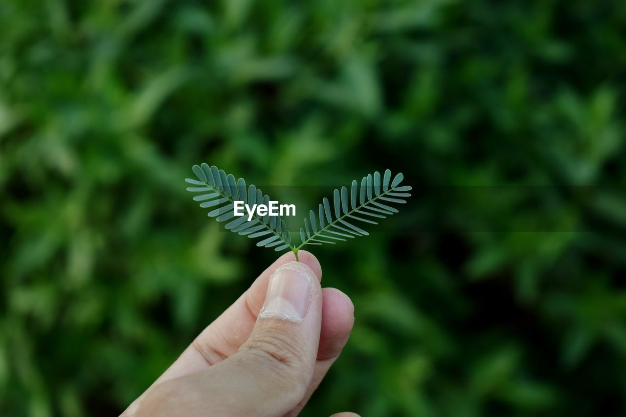 human hand, hand, human body part, one person, body part, finger, human finger, real people, plant, personal perspective, green color, holding, leaf, unrecognizable person, plant part, focus on foreground, nature, lifestyles, close-up, outdoors, leaves, human limb