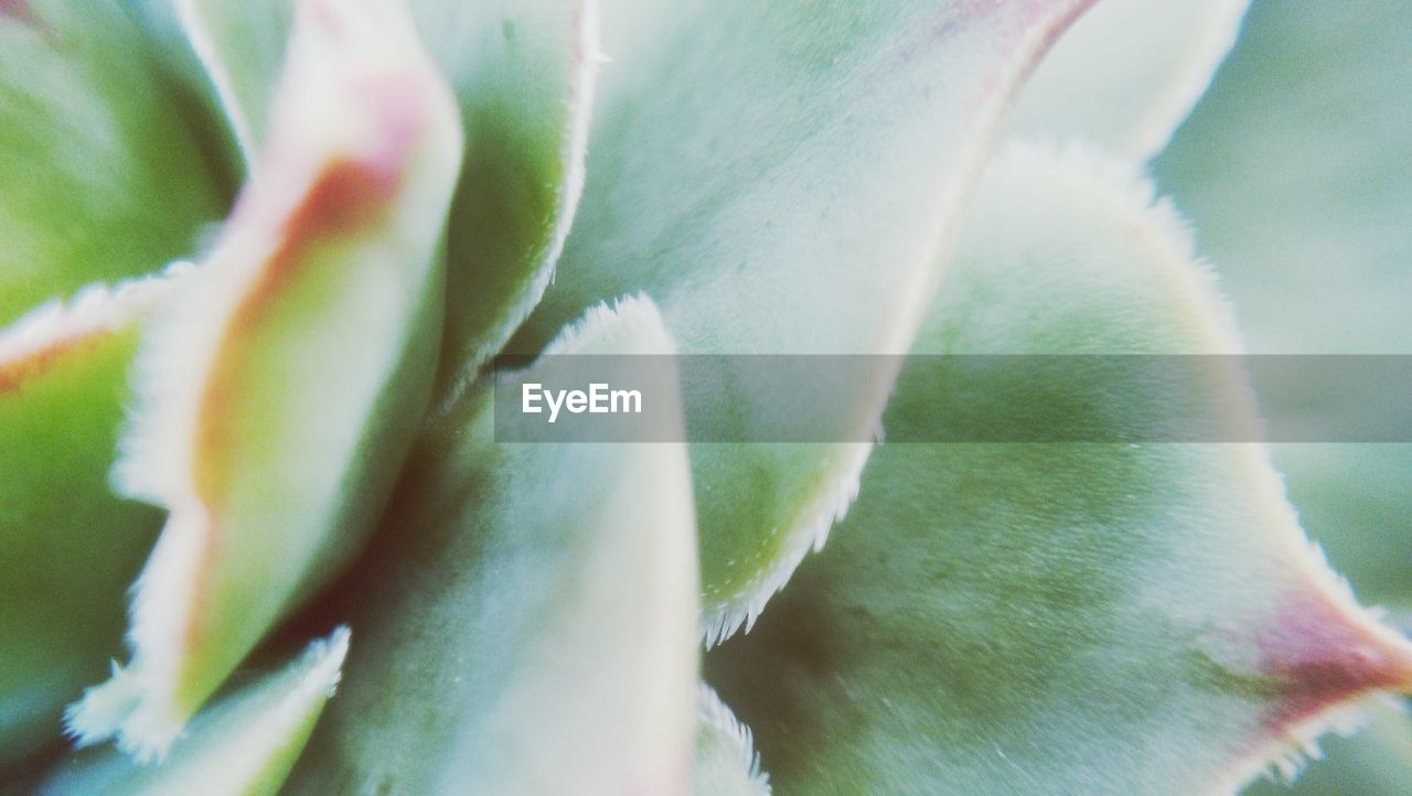 growth, plant, close-up, beauty in nature, flower, selective focus, no people, flowering plant, green color, freshness, vulnerability, nature, day, fragility, succulent plant, petal, plant part, flower head, botany, leaf