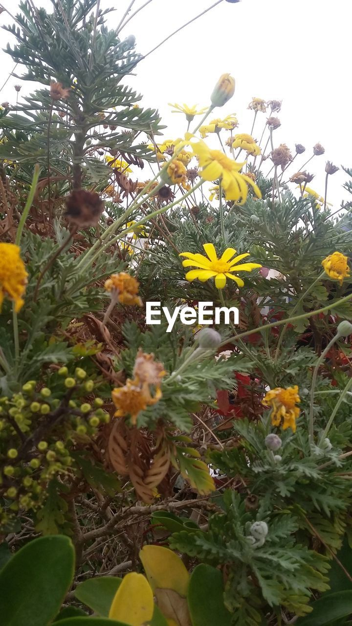 flower, growth, plant, nature, fragility, day, freshness, yellow, beauty in nature, outdoors, no people, blooming, flower head, close-up, sky