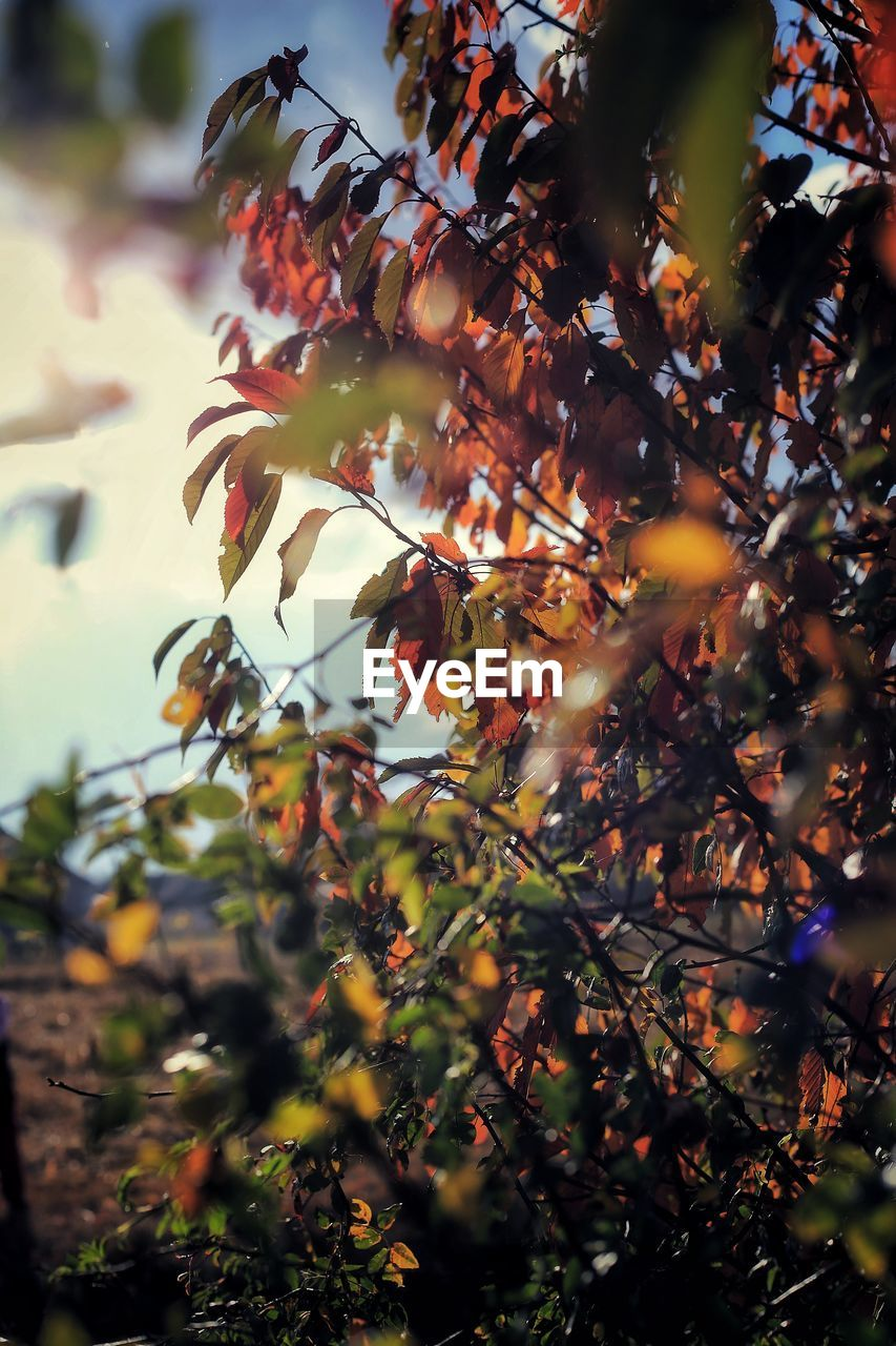 plant, growth, tree, beauty in nature, freshness, plant part, no people, leaf, nature, selective focus, close-up, branch, day, flower, flowering plant, fragility, sunlight, outdoors, focus on foreground, autumn