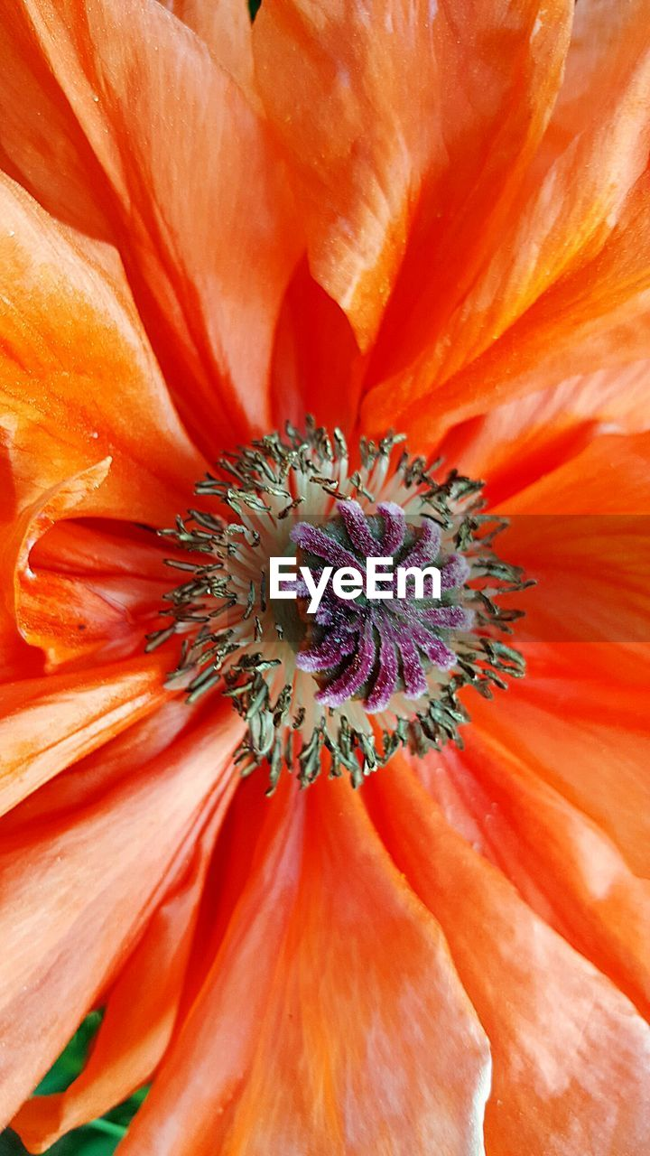 flower, petal, flower head, fragility, beauty in nature, freshness, nature, orange color, pollen, growth, full frame, backgrounds, close-up, blooming, day, plant, no people, stamen, outdoors, hibiscus, day lily