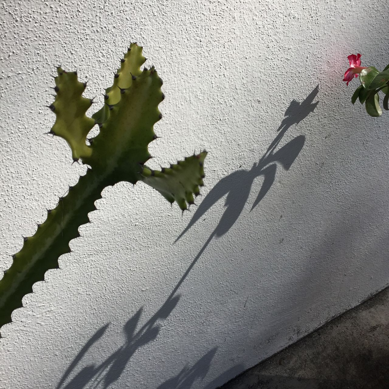 wall - building feature, shadow, growth, plant, sunlight, no people, day, nature, outdoors, leaf, close-up, flower, green color, ivy, architecture, beauty in nature, fragility, building exterior, freshness