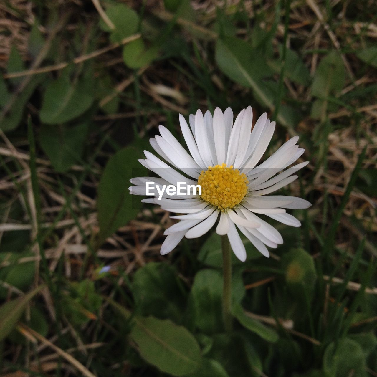 flower, petal, nature, growth, white color, fragility, beauty in nature, freshness, flower head, blooming, plant, outdoors, no people, close-up, day