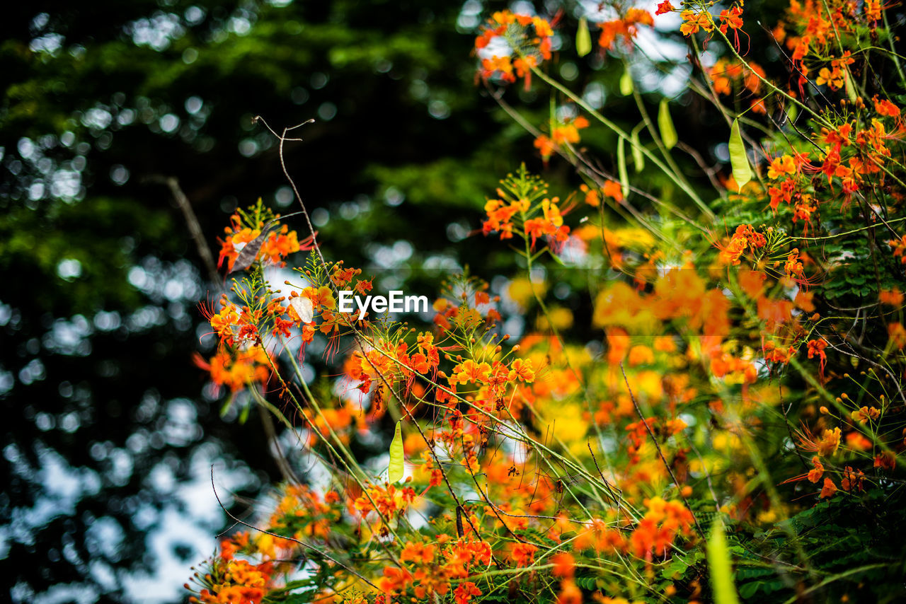 flower, growth, plant, orange color, nature, no people, beauty in nature, outdoors, freshness, fragility, day, close-up, blooming, flower head