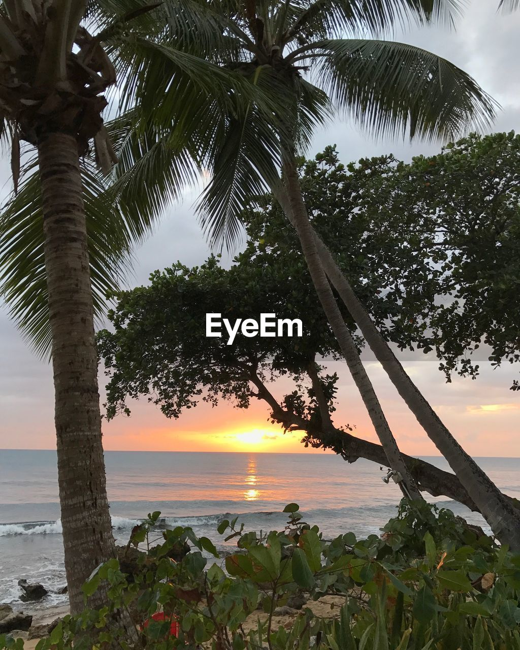 tree, sea, palm tree, scenics, nature, water, beauty in nature, growth, horizon over water, sky, tranquility, tranquil scene, beach, sunset, tree trunk, outdoors, no people, foreground, day