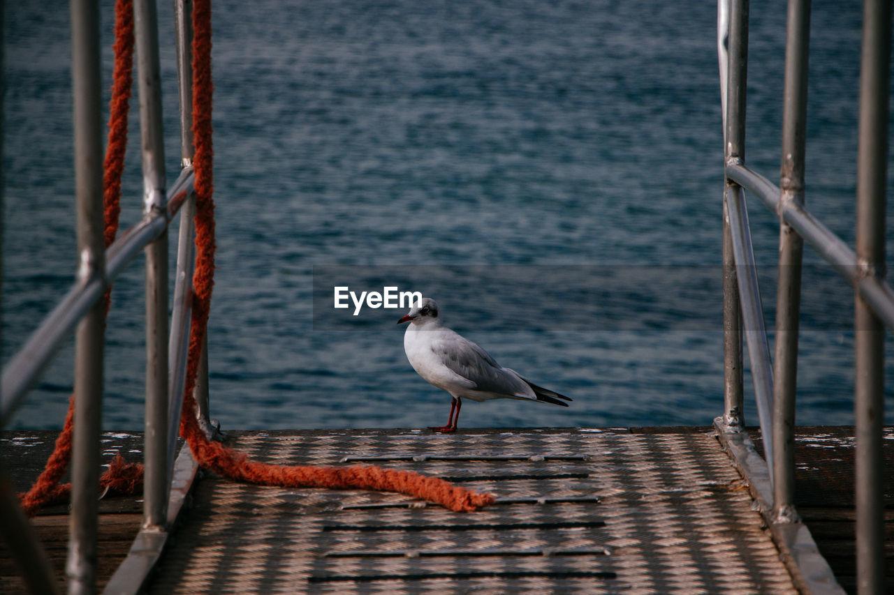 Seagull on pier against sea