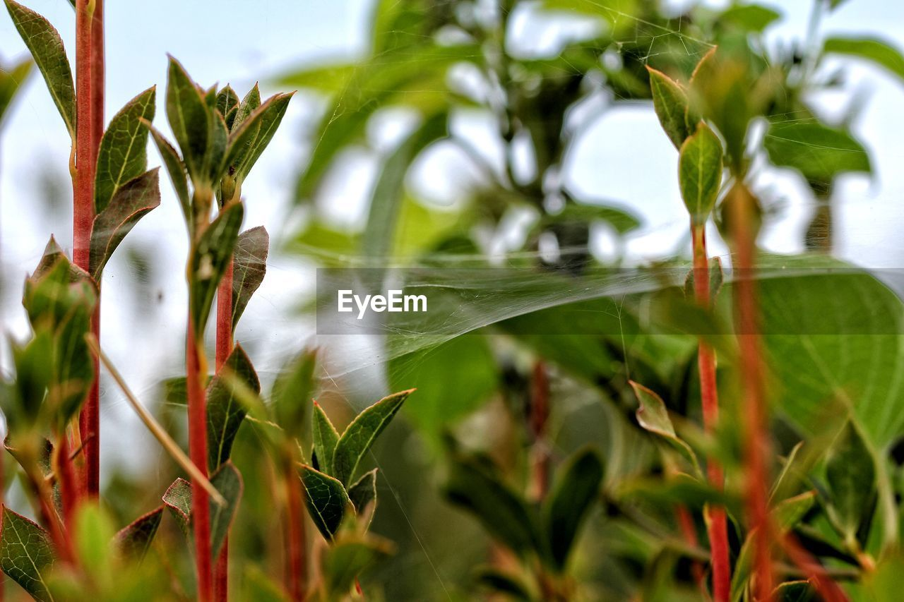 plant, growth, green color, leaf, plant part, beauty in nature, close-up, day, nature, no people, focus on foreground, selective focus, tranquility, outdoors, fragility, freshness, vulnerability, tree, field, land, blade of grass
