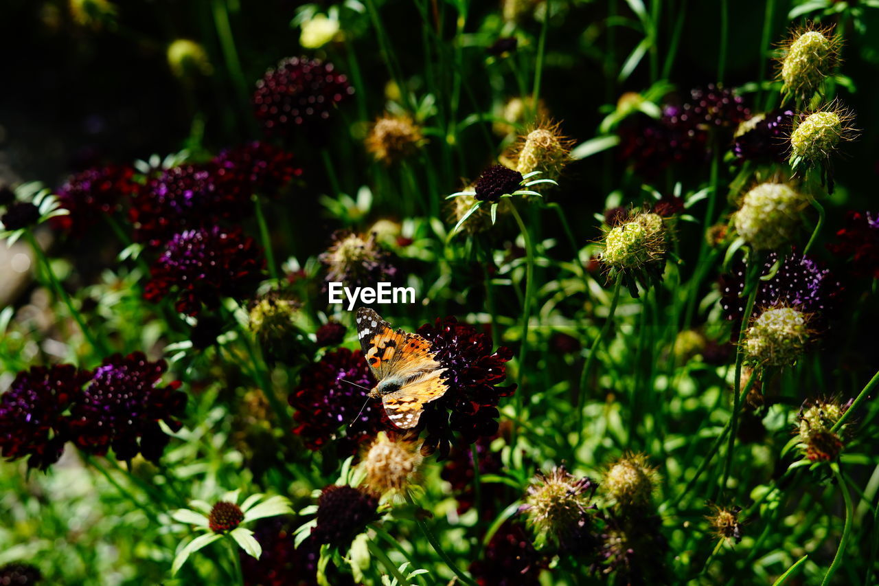 flowering plant, flower, beauty in nature, plant, freshness, growth, fragility, vulnerability, animals in the wild, nature, animal themes, animal wildlife, flower head, animal, petal, no people, close-up, invertebrate, one animal, insect, pollination, outdoors, animal wing, butterfly - insect