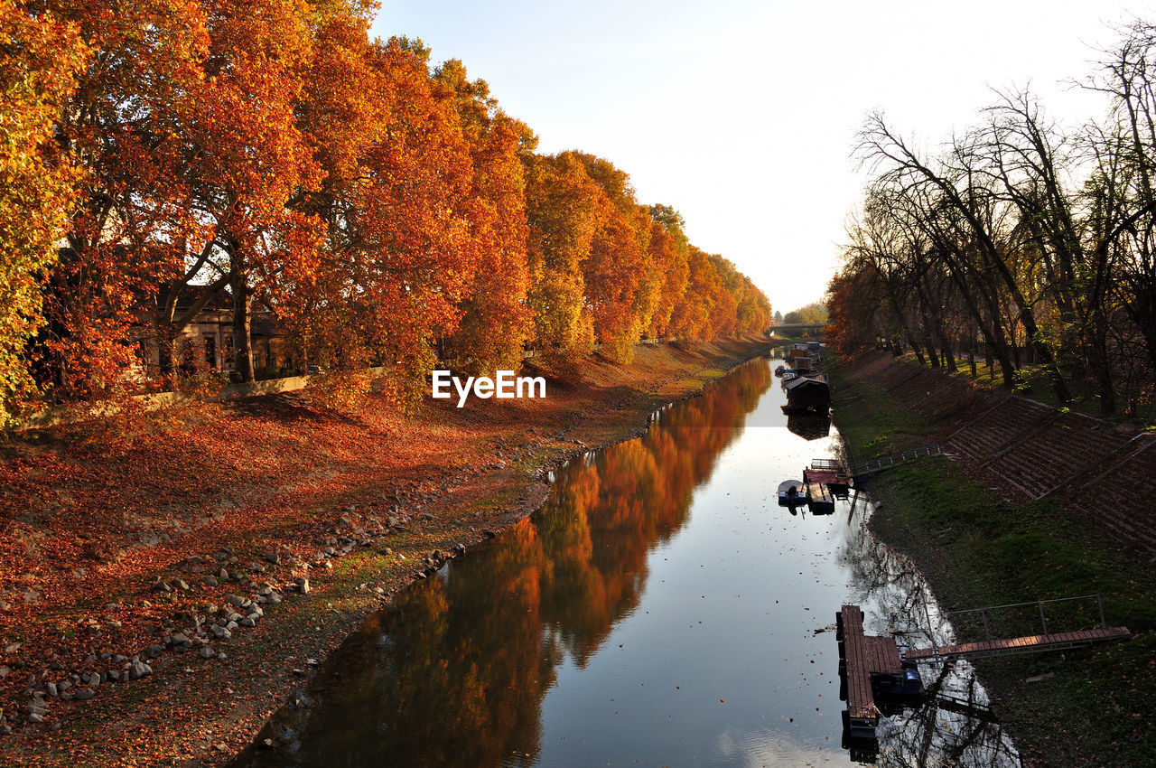 tree, autumn, water, plant, domestic, animal themes, animal, domestic animals, pets, nature, mammal, one animal, sky, vertebrate, orange color, change, day, reflection, dog, outdoors, no people, canal