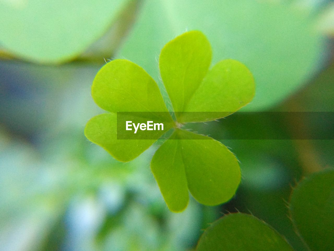 leaf, plant part, growth, plant, green color, close-up, beauty in nature, no people, day, nature, selective focus, focus on foreground, outdoors, freshness, clover, fragility, vulnerability, high angle view, tranquility, beginnings, leaves
