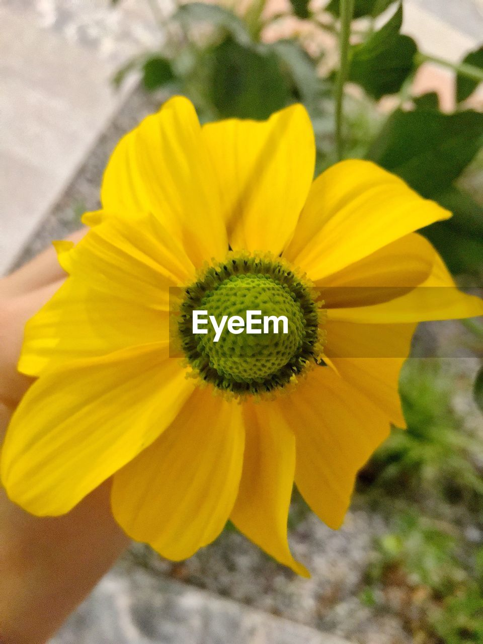 flower, yellow, petal, fragility, flower head, beauty in nature, nature, growth, plant, freshness, botany, outdoors, day, no people, close-up, blooming, field, springtime