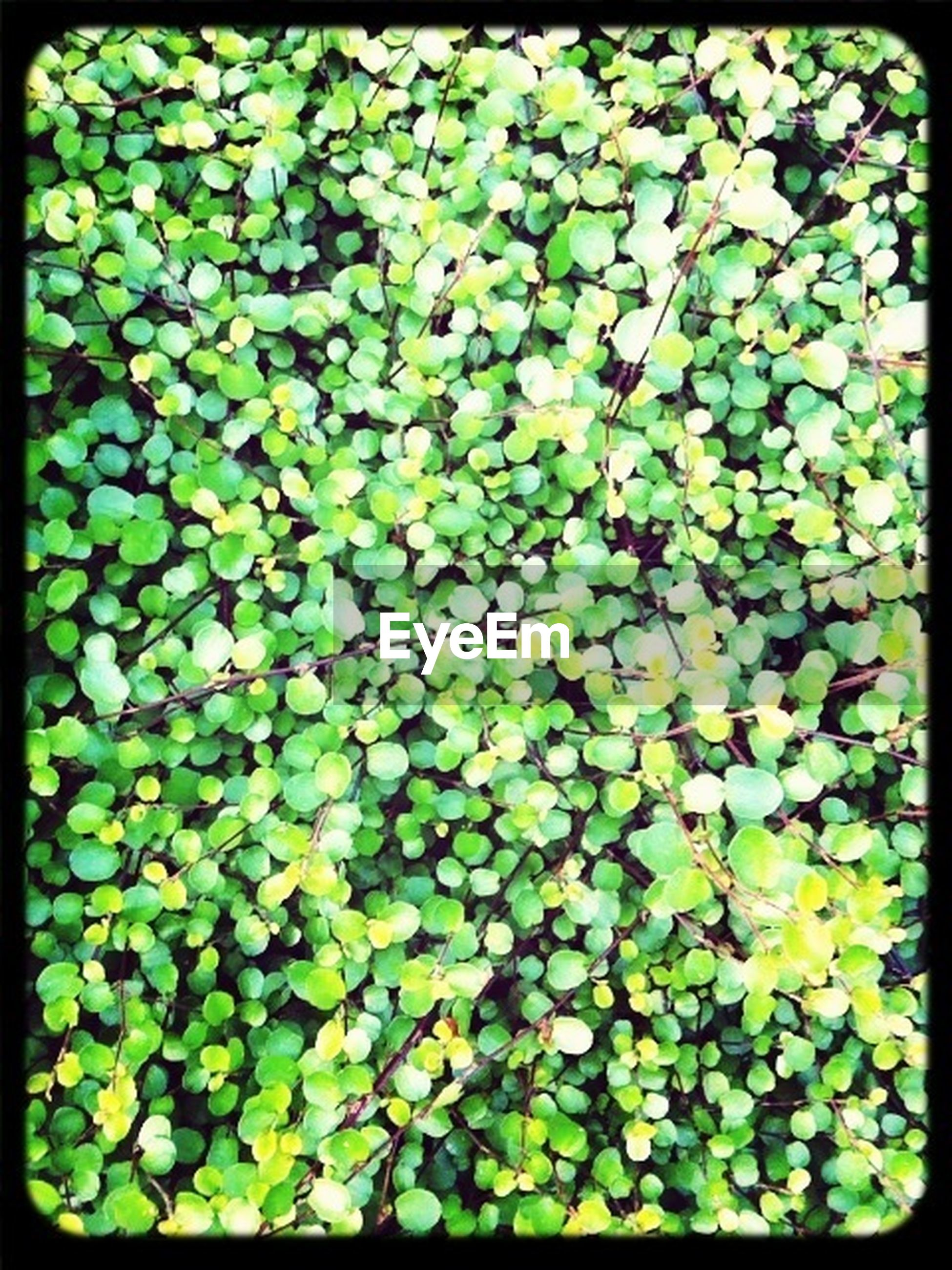 transfer print, full frame, backgrounds, leaf, auto post production filter, green color, growth, high angle view, nature, freshness, plant, beauty in nature, close-up, natural pattern, green, leaves, pattern, abundance, fragility, outdoors