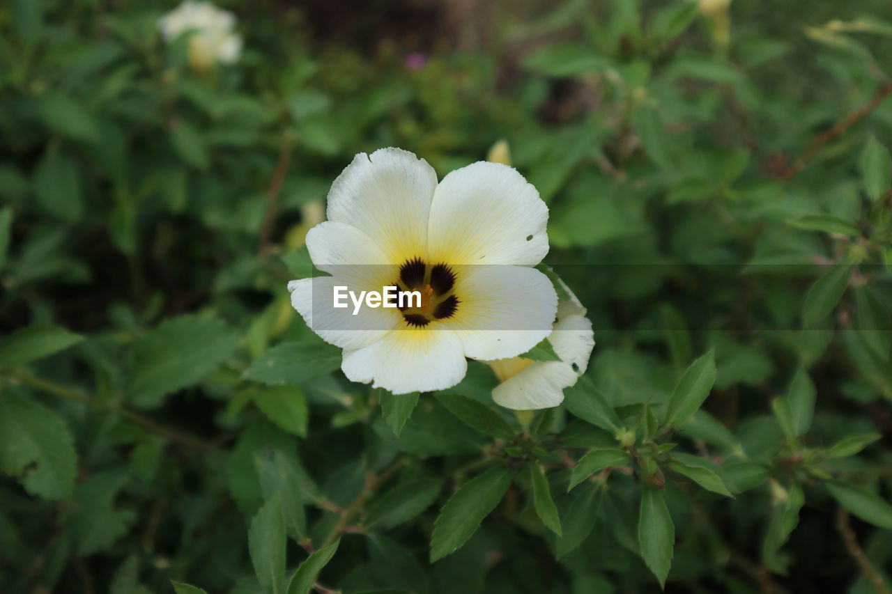 flower, flowering plant, plant, petal, fragility, beauty in nature, freshness, vulnerability, flower head, inflorescence, growth, close-up, nature, white color, focus on foreground, no people, yellow, day, green color, pollen