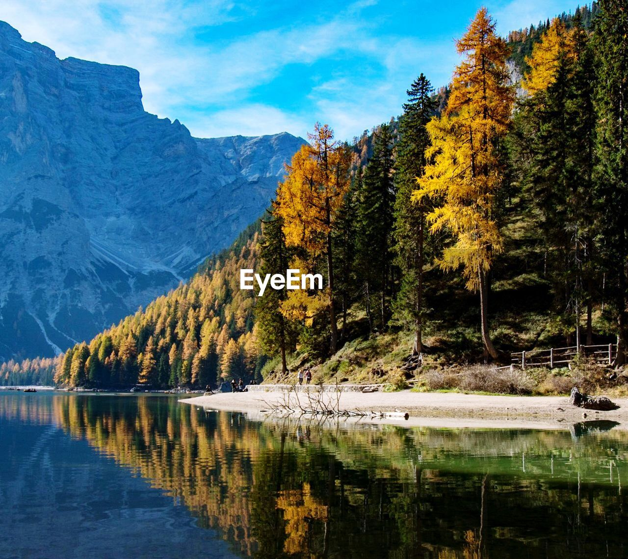 tree, water, beauty in nature, lake, reflection, plant, tranquility, scenics - nature, mountain, tranquil scene, autumn, waterfront, nature, sky, day, non-urban scene, change, idyllic, no people, outdoors, reflection lake