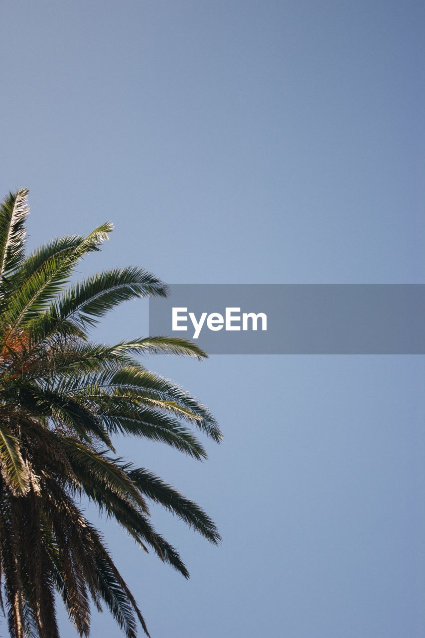 low angle view, palm tree, clear sky, copy space, tree, no people, day, outdoors, nature, growth, sky, beauty in nature