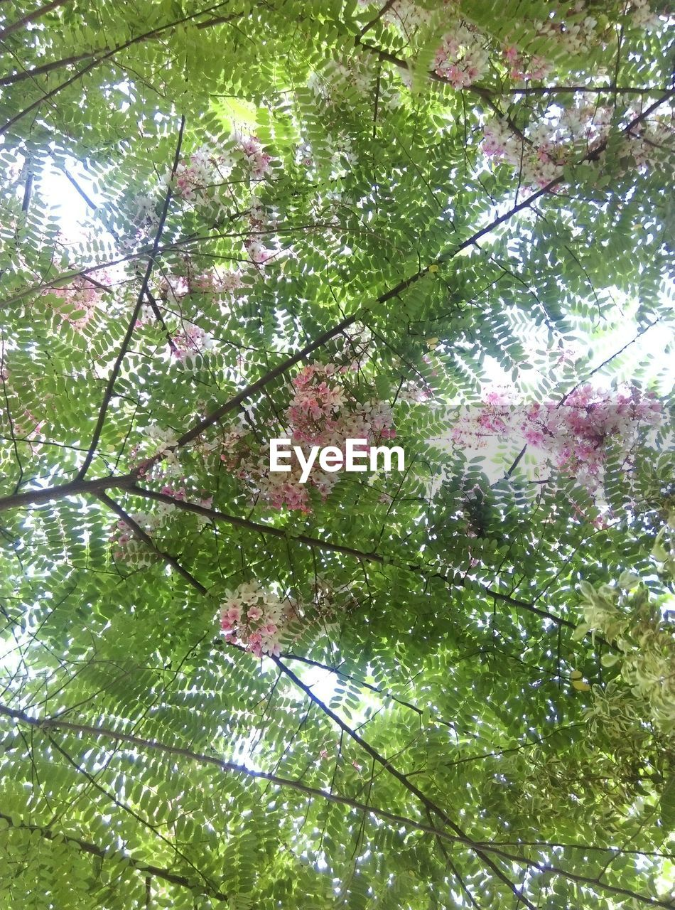 growth, nature, tree, beauty in nature, low angle view, branch, no people, springtime, freshness, flower, leaf, green color, fragility, day, outdoors, backgrounds, tranquility, full frame, close-up, sky
