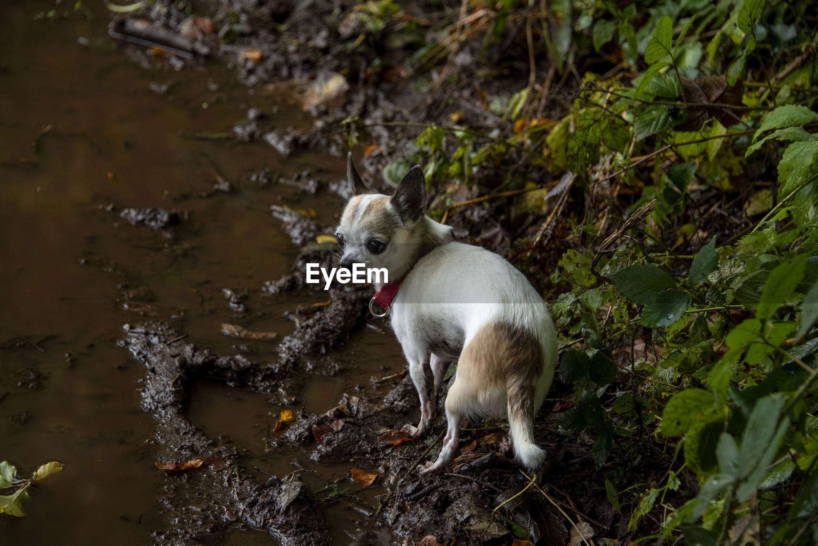 Dog standing on edge of water