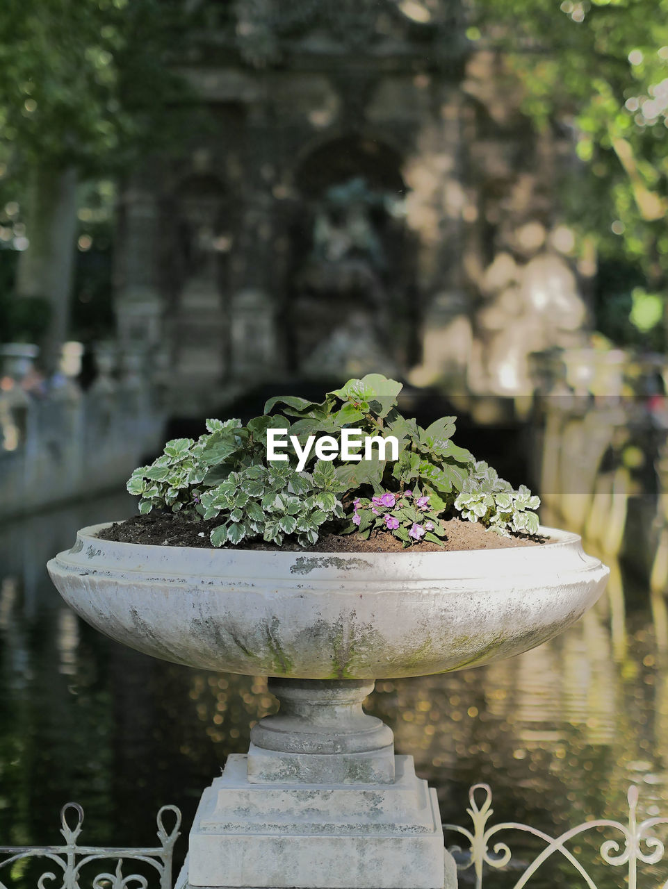 plant, growth, focus on foreground, day, nature, flower, flowering plant, no people, green color, architecture, water, outdoors, freshness, built structure, potted plant, garden, close-up, beauty in nature, leaf, flower pot