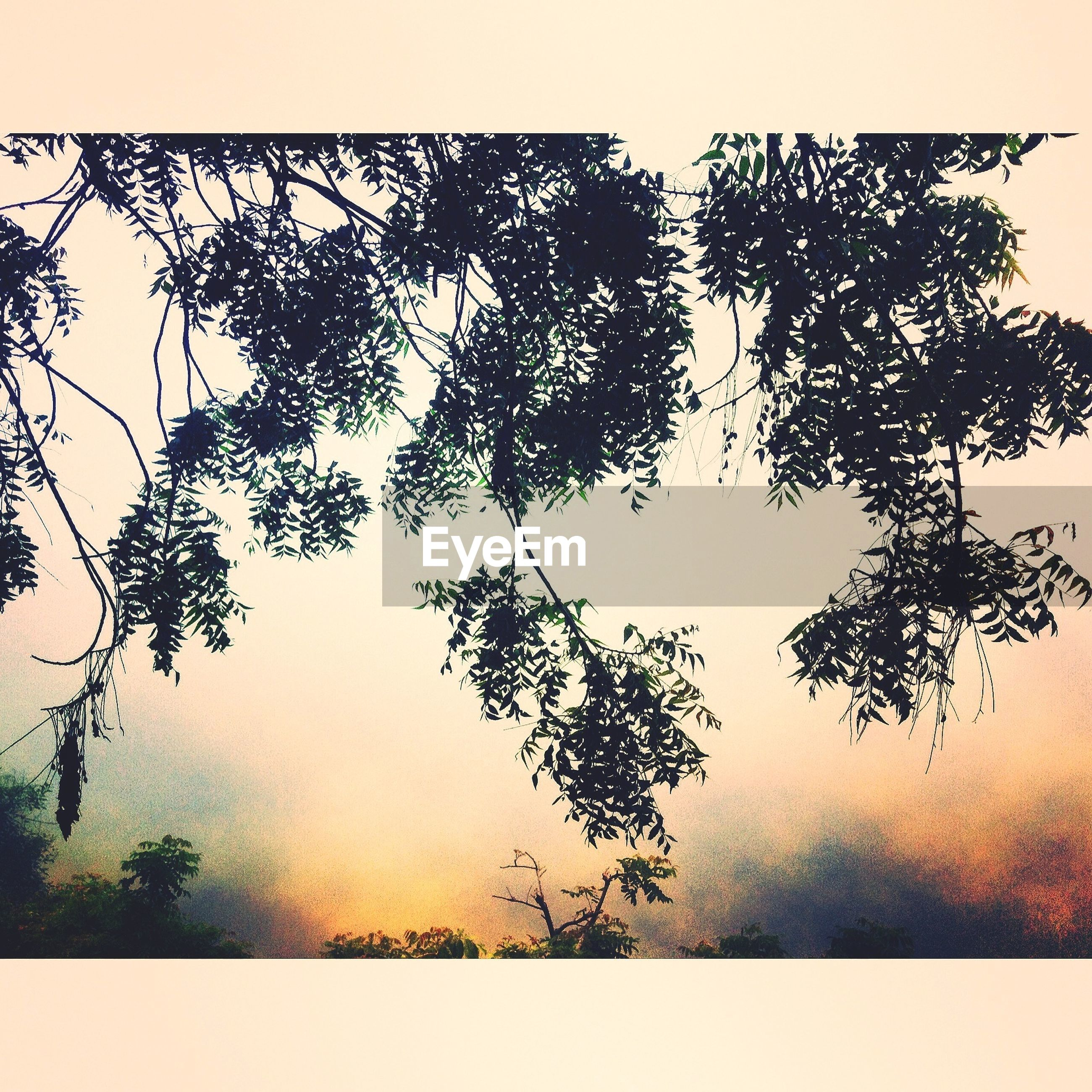tree, transfer print, auto post production filter, branch, growth, tranquility, nature, clear sky, sky, tranquil scene, beauty in nature, scenics, silhouette, outdoors, field, no people, day, plant, leaf