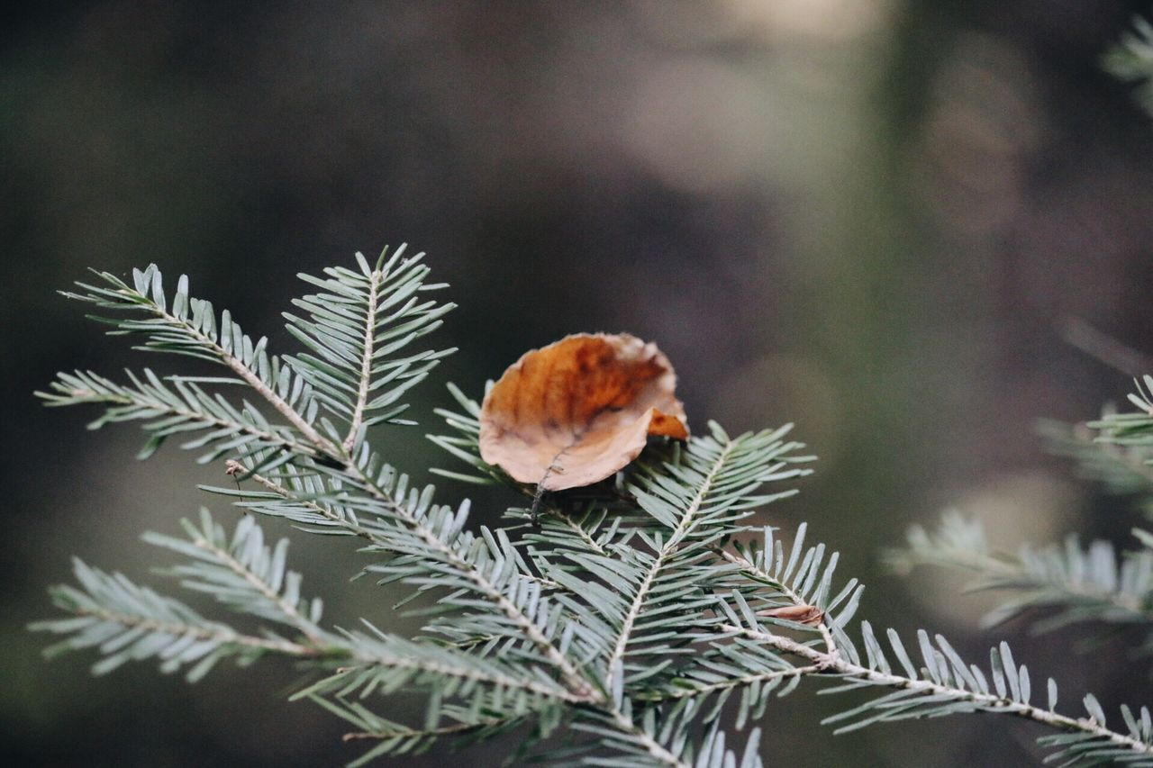 nature, focus on foreground, close-up, no people, beauty in nature, day, growth, plant, outdoors, freshness, leaf, cold temperature, tree