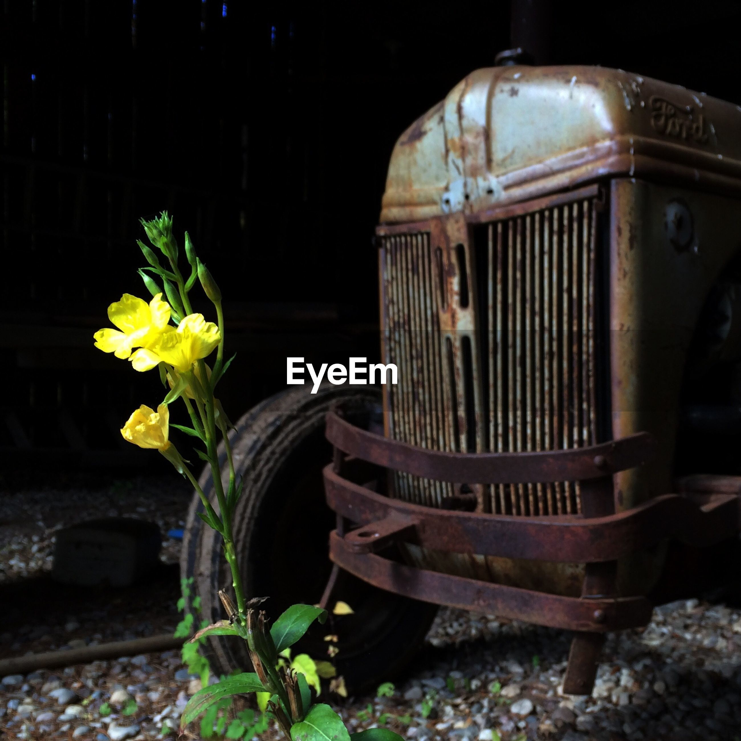 Rusty abandoned truck next to flower