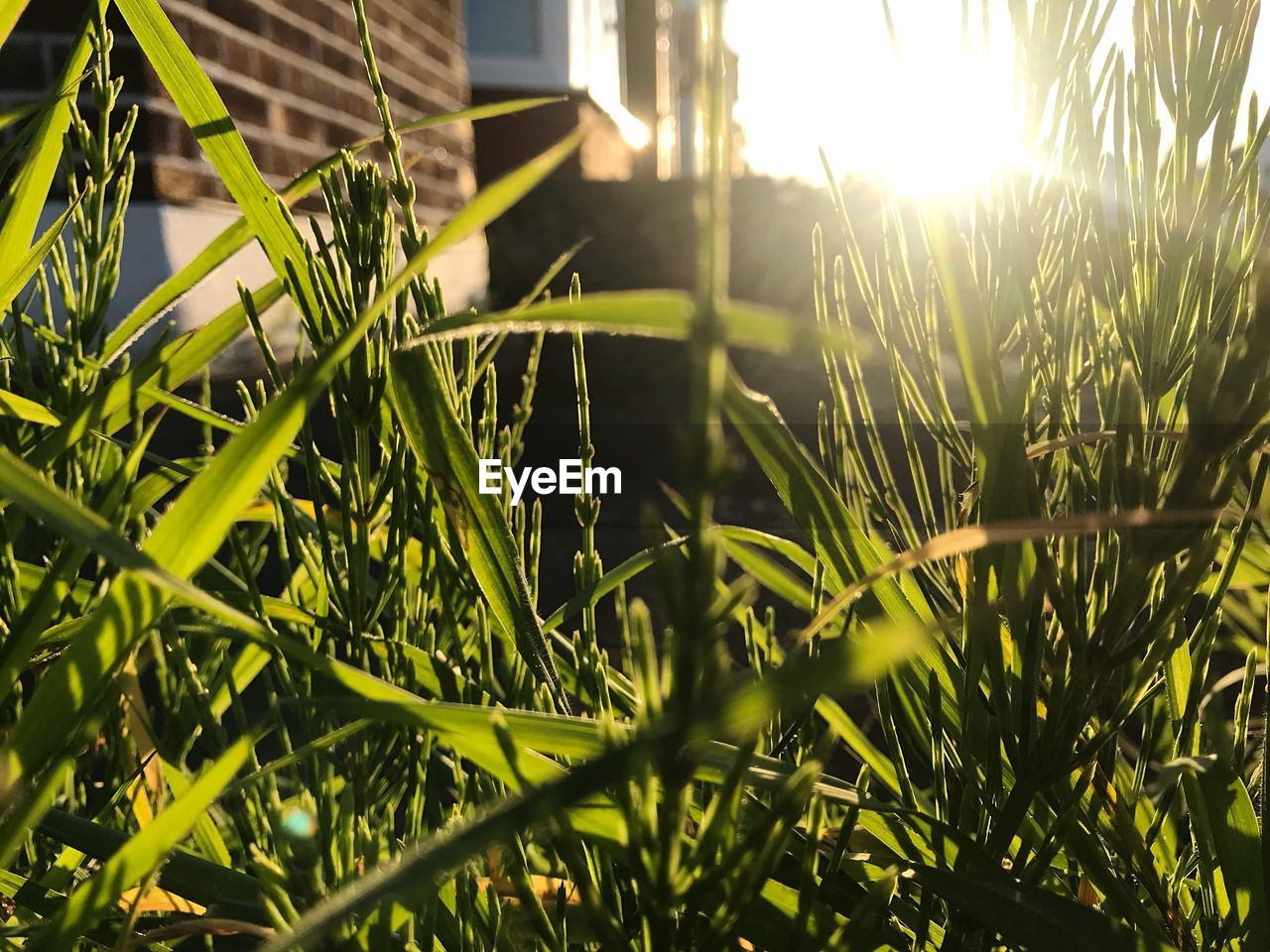 plant, growth, grass, sunlight, nature, green color, selective focus, day, beauty in nature, field, no people, blade of grass, outdoors, land, close-up, lens flare, built structure, leaf, sunbeam, plant part, brightly lit
