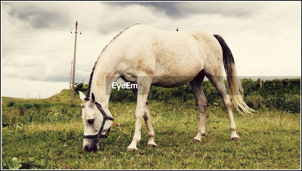 horse, domestic animals, animal themes, mammal, livestock, field, herbivorous, grazing, grass, day, standing, foal, outdoors, no people, nature, young animal, sky, full length