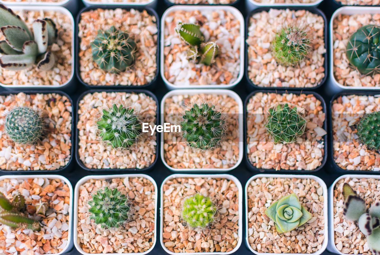 High Angle View Of Various Succulent Plants And Cactus Growing In Pots
