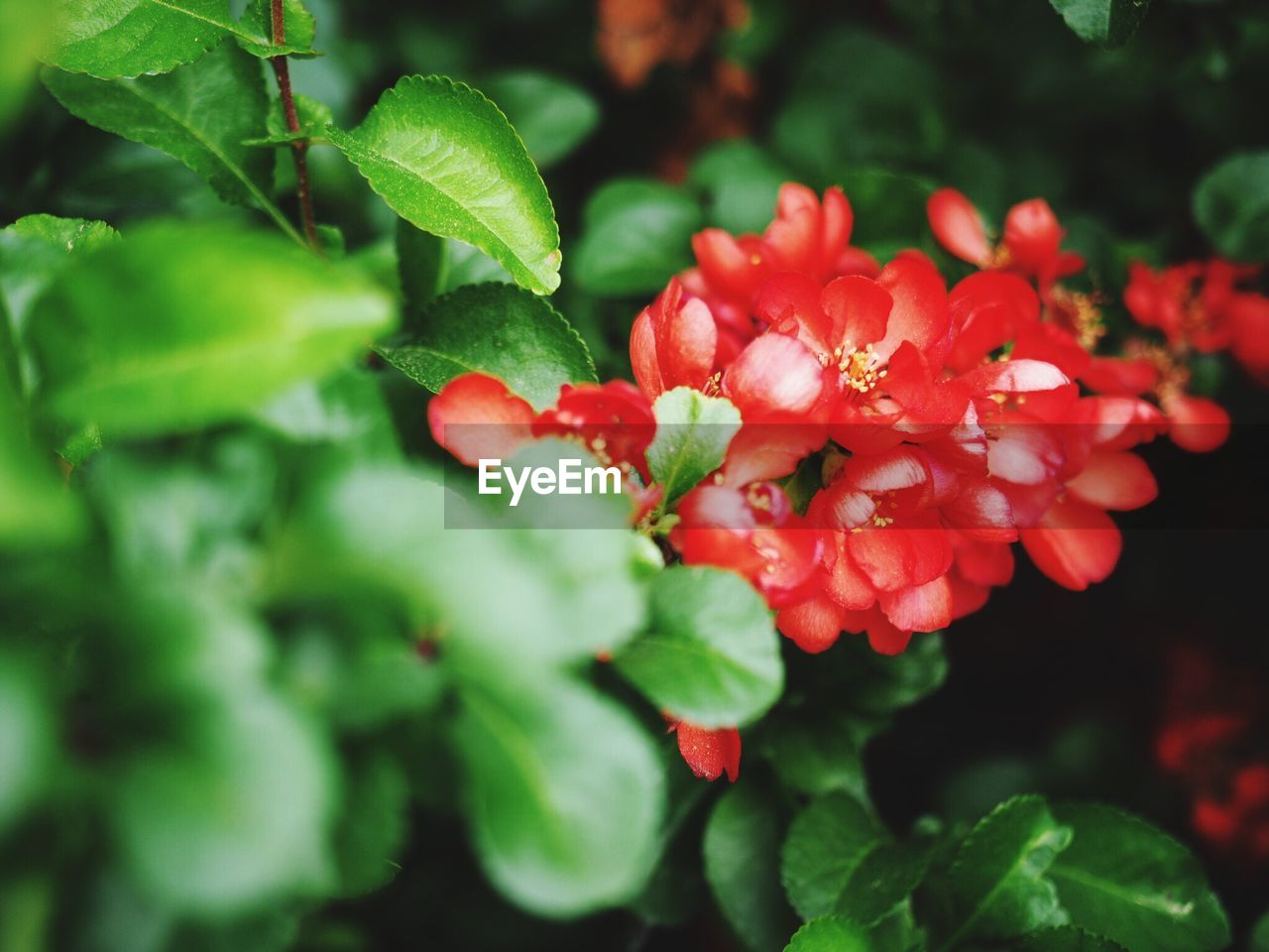 growth, beauty in nature, red, nature, flower, green color, fragility, freshness, leaf, plant, petal, outdoors, day, close-up, no people, flower head, blooming