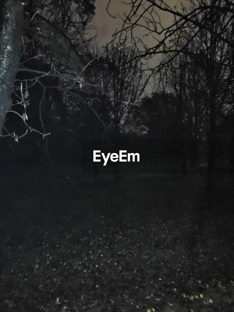 tree, plant, bare tree, no people, land, nature, forest, tranquility, branch, beauty in nature, outdoors, trunk, tranquil scene, tree trunk, scenics - nature, woodland, field, spooky, night, sky