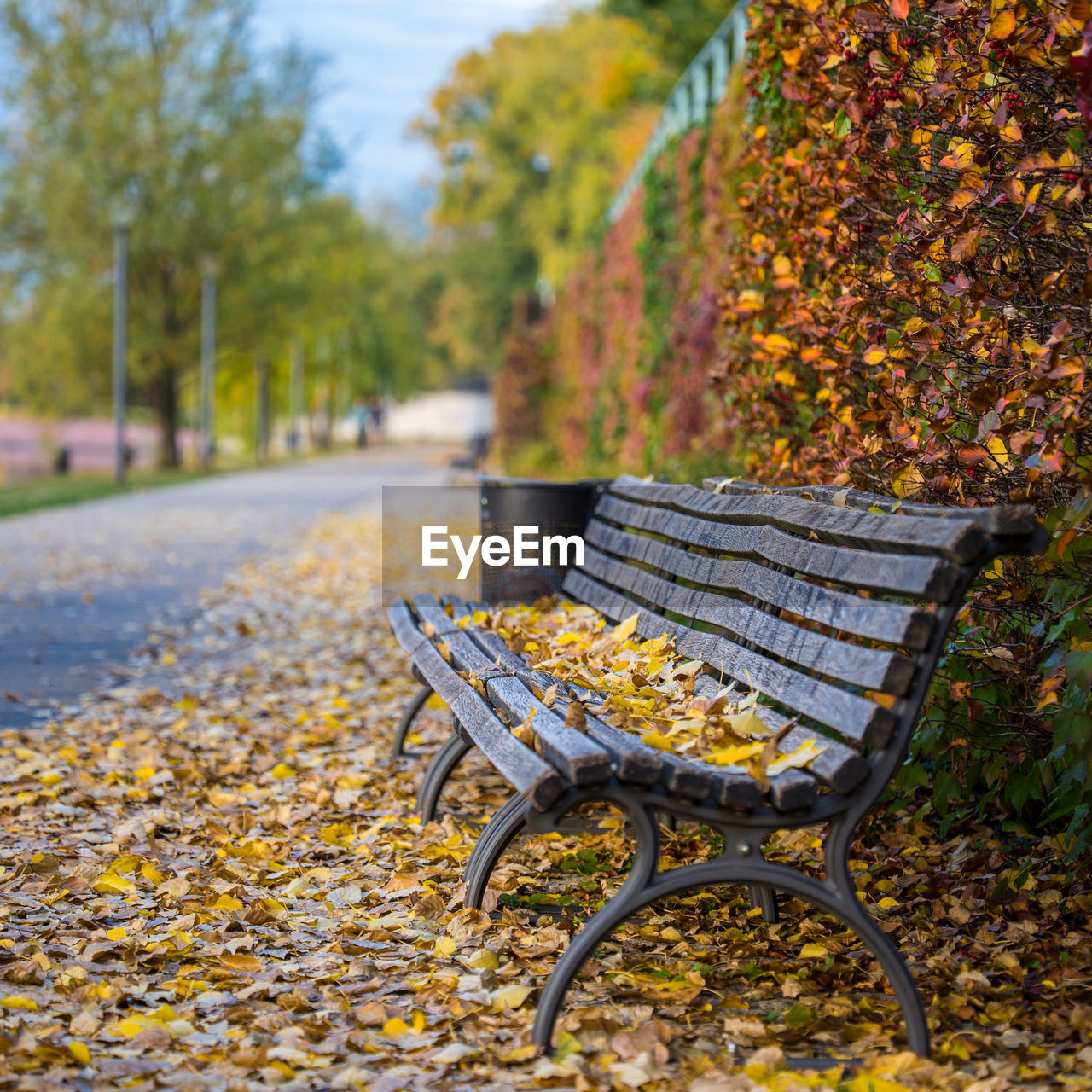 autumn, seat, change, plant, empty, nature, no people, day, leaf, absence, plant part, focus on foreground, park, tree, yellow, chair, park - man made space, bench, park bench, outdoors, ornamental garden