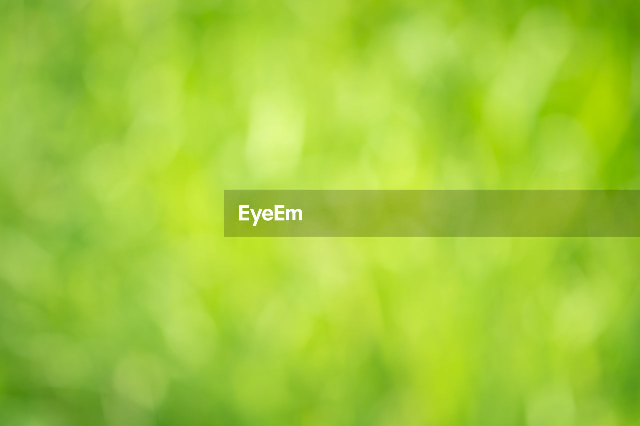 green color, beauty in nature, no people, backgrounds, nature, full frame, defocused, tranquility, day, selective focus, plant, growth, outdoors, focus on foreground, close-up, sunlight, freshness, environment, land, fragility