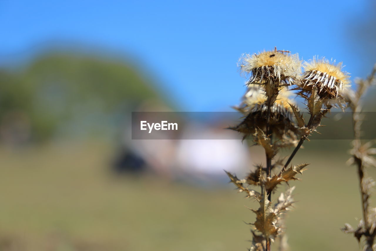 close-up, focus on foreground, plant, beauty in nature, day, no people, fragility, growth, nature, vulnerability, selective focus, flower, outdoors, invertebrate, flowering plant, animals in the wild, insect, freshness, one animal, sky, flower head, wilted plant
